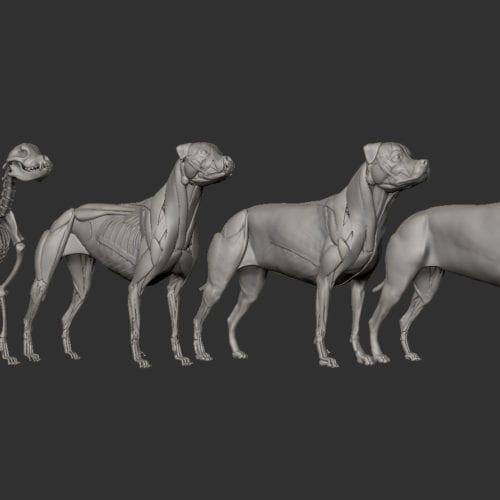 Rottweiler Steps