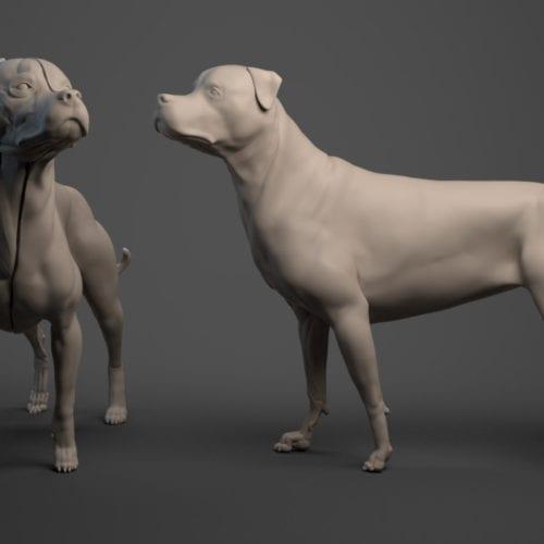Rottweiler front-left